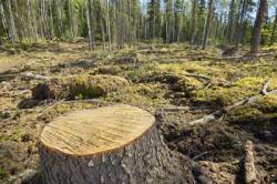 deforestazione_4